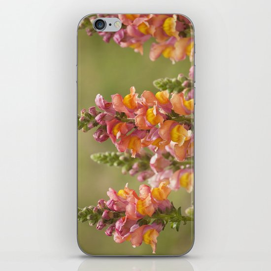 Snappy Tangerine Tango iPhone & iPod Skin