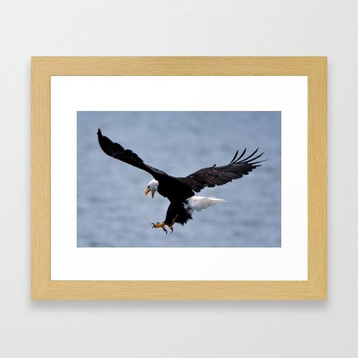Bald Eagle Attack Framed Art Print