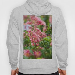 Aesculus red blossom cluster Hoody