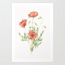 Fragile Beauty - Watercolor Poppies Art Print