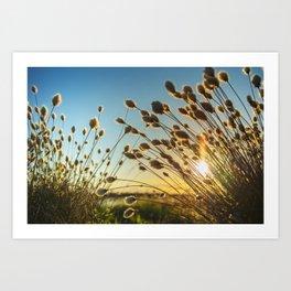 Cotton grass from the high moorland Art Print