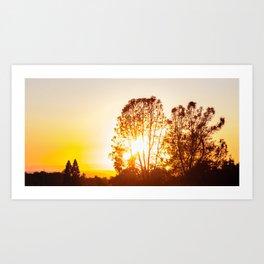Sunset Shy Art Print
