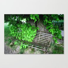 Ivy Bench Canvas Print