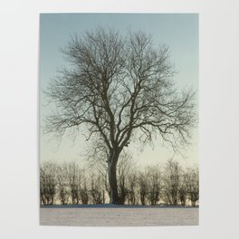 Winter tree in the low sun Poster