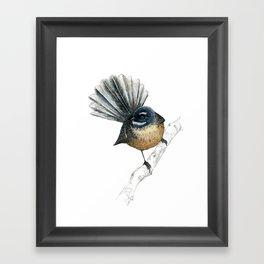 Mr Pīwakawaka, New Zealand native bird fantail Framed Art Print