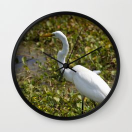 Great Egret On Prowl >> Great Egret Wall Clocks Society6