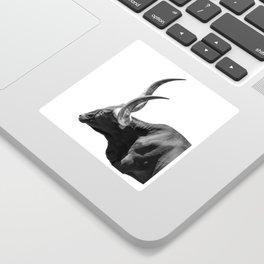 Ankole-Watusi | Animal Photography Sticker