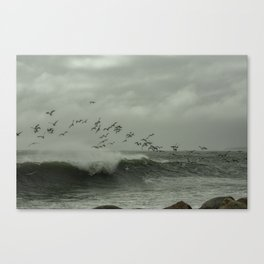 Birds dancing in the waves Canvas Print