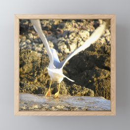 seagull flying Framed Mini Art Print
