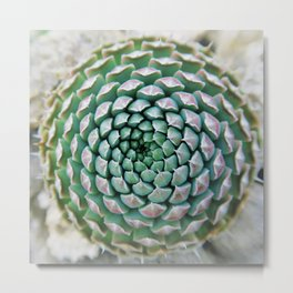 succulent - great design Metal Print
