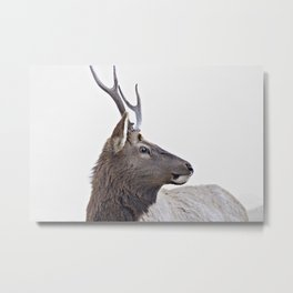 Deer, animal Metal Print