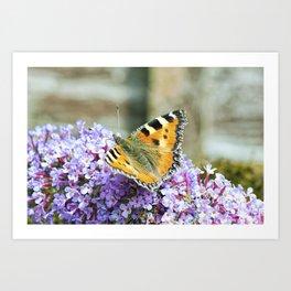 Butterfly IX Art Print