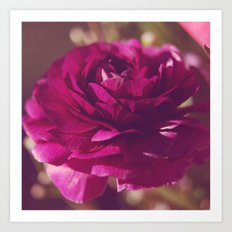 Crimson Rose Art Print