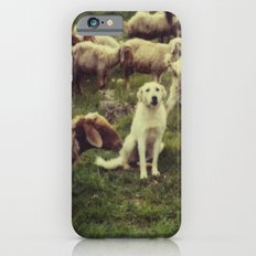 Herding dog, male, south of Israel, scaned sx-70 Polaroid iPhone 6s Slim Case