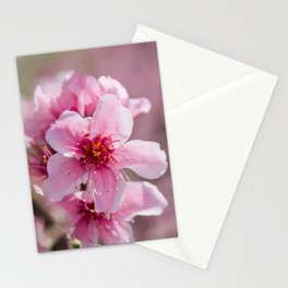 Peach Blossoms 14 Stationery Cards