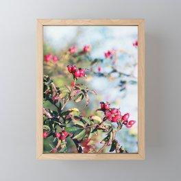 Rosehips Framed Mini Art Print