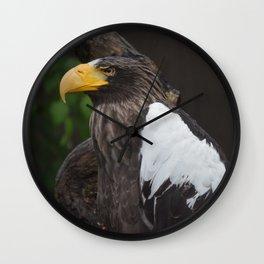 National Aviary - Pittsburgh - Stellers Sea Eagle 2 Wall Clock