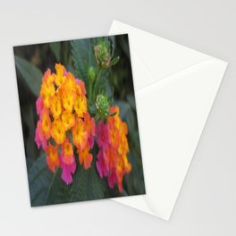 Flowers in Spain Stationery Cards