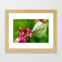 Butterfly's inn ... Framed Art Print
