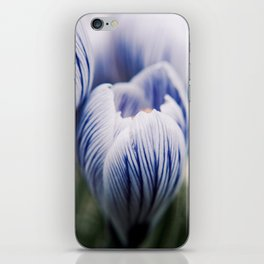 Spring Crocus iPhone Skin