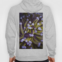 Coral Euphylia Golden Torch Hoody