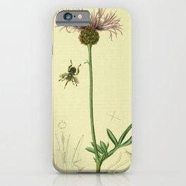 Flower Great Knapweed centaurea scabiosa18 iPhone Case