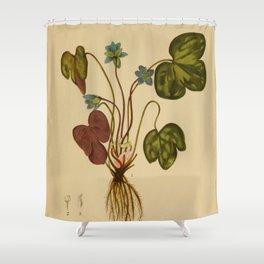Anemone hepatica Shower Curtain