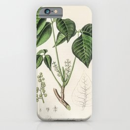 Poison ivy (Rhus toxicodendron)  from Medical Botany (1836) by John Stephenson and James Morss Churc iPhone Case