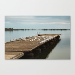 Seagulls on a wooden pier at Lake Palic / Serbia Canvas Print