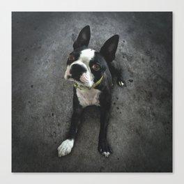 BOSCO (rescue pup) Canvas Print