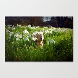 Amongst the Snowdrops Canvas Print