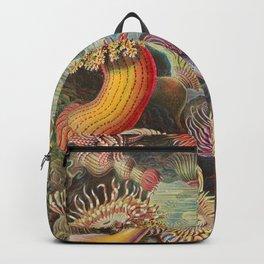 Ernst Haeckel Sea Anemones Vintage Illustration Backpack