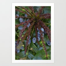 berry expolosion Art Print