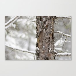 Tree Bark in the Winter Canvas Print