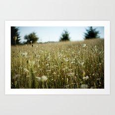 field (Oregon) Art Print