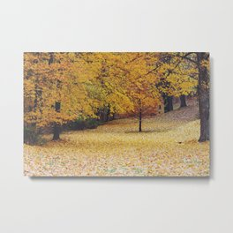 Autumn in Wooster Metal Print