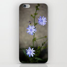 Chicory In The Concrete Jungle iPhone Skin