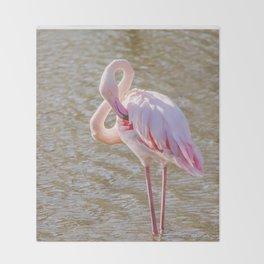 Pink Flamingo, Greater flamingo in their natural environment (Phoenicopterus roseus) Throw Blanket