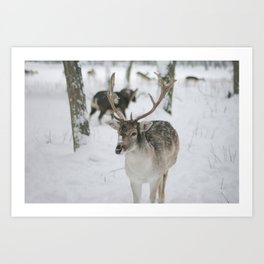 Snowy Nose Art Print