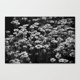 Chloe's Wild Flowers Canvas Print