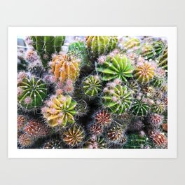 colorful cacti Art Print