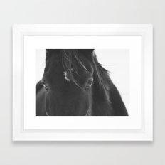 Close Up Black Horse Photograph Framed Art Print