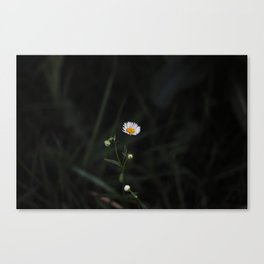 Small Flower Canvas Print