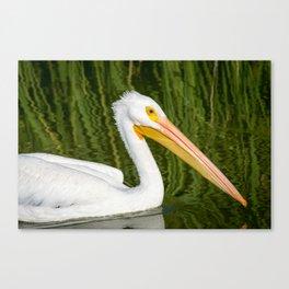 The American White Pelican Canvas Print