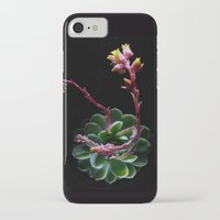 succulent iPhone & iPod Cases featuring Succulent  by Nimai VandenBos