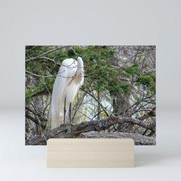 GREAT WHITE EGRET (4 OF 4) - BOWING Mini Art Print