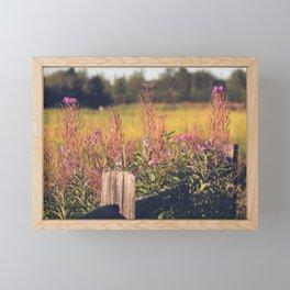 Fall Fireweed at Creamers Field, Fairbanks Alaska Framed Mini Art Print