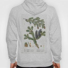 Eastern hemlock Abies Canadensis and Balsam fir Abies balsamea from Traite des Arbres et Arbustes qu Hoody