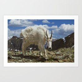 Mountian Goat Art Print
