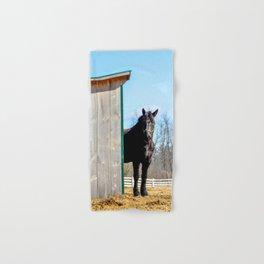 Percheron Horse by Teresa Thompson Hand & Bath Towel